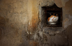 Dramatic portrait of street stray cat sitting in abandoned house Royalty Free Stock Images