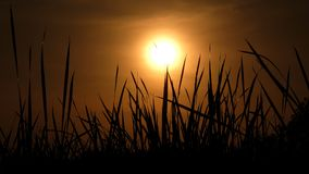 Dramatic golden sunrise with silhouette grass. Dramatic powerful golden sunrise with silhouette grass Stock Images