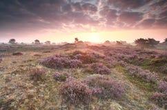 Dramatic purple sunrise over heathland. Dramatic purple sunrise over pink heathland Royalty Free Stock Photos