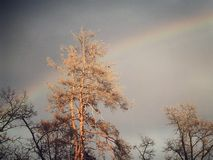 A dramatic rainbow hides cleverly behind a beautiful tree. Rainbows can inspire people to get into nature and enjoy all of God`s wonders stock image