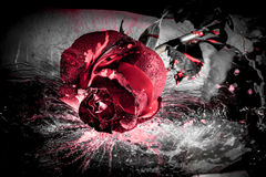 Dramatic red rose Stock Images