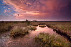 Dramatic red sunset over swamp Royalty Free Stock Images