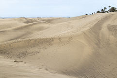 Dramatic sand dunes at Maspalomas on Gran Canaria. with palm trees. Stock Photos