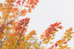 Dramatic sentimental and romantic autumn colors background Stock Image