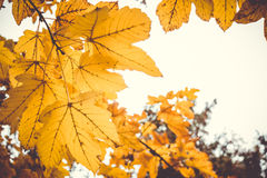 Dramatic sentimental and romantic autumn colors background Royalty Free Stock Photo