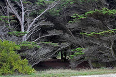Dramatic Silver trees Stock Images