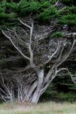 Dramatic Silver trees Royalty Free Stock Photos