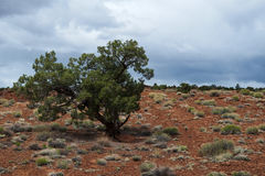 Dramatic single bush in a desert of the usa. Single bush in a dry desert with dramtic blue and cloudy sky in the back Stock Images
