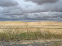 Dramatic skies above a prairie landscape near Spokane. Yellow wheat-fields are contrasted sharply against dark brooding skies in the vicinity of Spokane stock photography