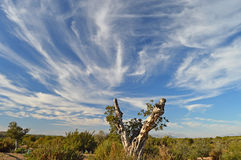 Dramatic Crazy Sky Over Olive Tree-Cloud Windy Bad Weather Signs Royalty Free Stock Image