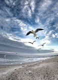 Dramatic sky on the beach with birds stock images