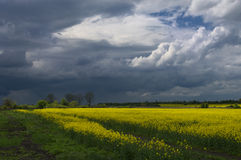 Dramatic sky and colza field Stock Photography