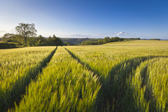 Dramatic sky, Idyllic rural landscape, Cotswolds UK Stock Image