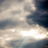 Dramatic sky. Lonely bird in Dramatic skies. Dark ominous grey storm clouds. Nature background. Dramatic sky stock images