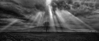Dramatic sky. Ominous cloud formation with a lonely tree on the foreground stock photo
