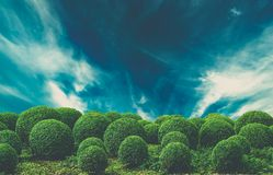 Dramatic sky over bushes Stock Images