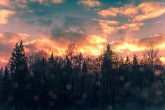 Dramatic sky over forest Stock Image