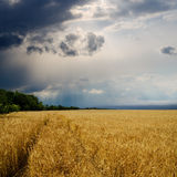 Dramatic sky over golden field. Rain before Royalty Free Stock Images