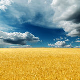 Dramatic sky over golden harvest Royalty Free Stock Images