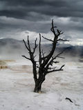 Dramatic sky over lonely dead tree in Yellowstone. Dramatic sky over lonely dead tree in Mammoth Hot Springs terraces in Yellowstone National Park (Wyoming, USA royalty free stock image