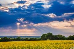 Dramatic sky over oilseed rape field Kent Southern England UK Stock Photography