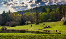 Dramatic sky over a pond in the Shenandoah Valley, Virginia. Stock Photos