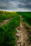 Dramatic sky over road surrounded by colza and green wheat. Dramatic sky over road surrounded by yellow colza and green wheat Royalty Free Stock Photos