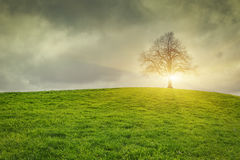 Dramatic sky and sunsrise over old lonely tree Stock Photos