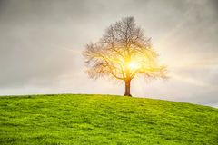 Dramatic sky and sunsrise over old lonely tree Stock Image