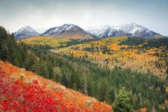 Free Dramatic Snowy Fall Scene In The Utah Mountains, USA. Royalty Free Stock Photos - 129451388