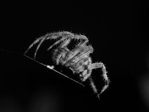Dramatic Spider Stock Photography