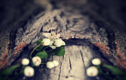 Dramatic Spring flowers on a rustic wooden background. Blurred s Stock Images