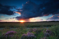 Dramatic storm and sunset over swamp Royalty Free Stock Photography