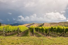 Dramatic stormy sky above vineyards in Marlborough, New Zealand royalty free stock photography