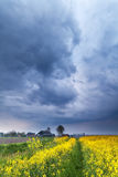 Dramatic stormy sky over rapeseed flower field Royalty Free Stock Images