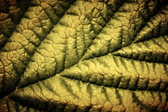 Dramatic structure of a leaf. Royalty Free Stock Images