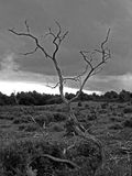 A dramatic study in black and white of a tree Royalty Free Stock Photos