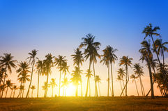 Dramatic stunning morning light sunset. And Silhouetted of coconut tree in low light photography - Summer holiday concept Royalty Free Stock Photo