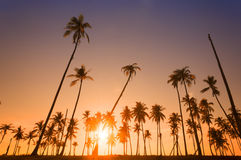 Dramatic stunning morning light sunset. And Silhouetted of coconut tree in low light photography - Summer holiday concept Royalty Free Stock Image