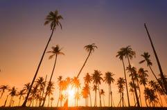 Dramatic stunning morning light sunset Royalty Free Stock Image