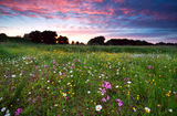 Dramatic summer sunset over flowering meadow Royalty Free Stock Photography