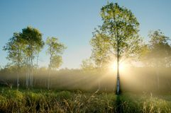 Dramatic Sun Beams in the Foggy Aspen Meadow stock photos