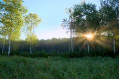 Dramatic Sun Beams in the Foggy Aspen Meadow Royalty Free Stock Photo