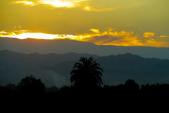 Dramatic sunrise above mountains and palm tree Royalty Free Stock Photos