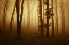 Dramatic sunrise in a forest with fog in autumn Royalty Free Stock Image