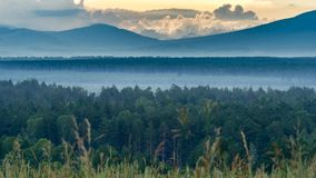 Dramatic sunrise in the mountains with thick evergreen forest in foreground covered with fog, Altai Mountains, Kazakhstan.  Stock Images