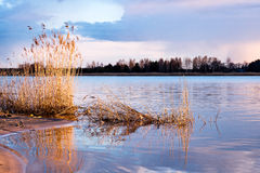 Dramatic sunrise over the calm river. In spring with bent grass against sun. Daugava, Latvia Stock Photos