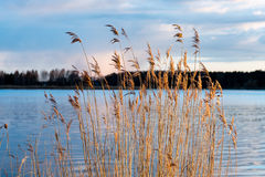 Dramatic sunrise over the calm river. In spring with bent grass against sun. Daugava, Latvia Stock Photo