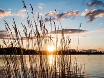 Dramatic sunrise over the calm river. In spring with bent grass against sun. Daugava, Latvia Royalty Free Stock Images