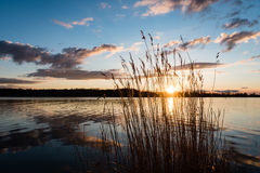 Dramatic sunrise over the calm river. In spring with bent grass against sun. Daugava, Latvia Stock Images